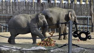 Ha el akar olvadni, ősszel mindenképpen látogasson el a Fővárosi Állatkertbe