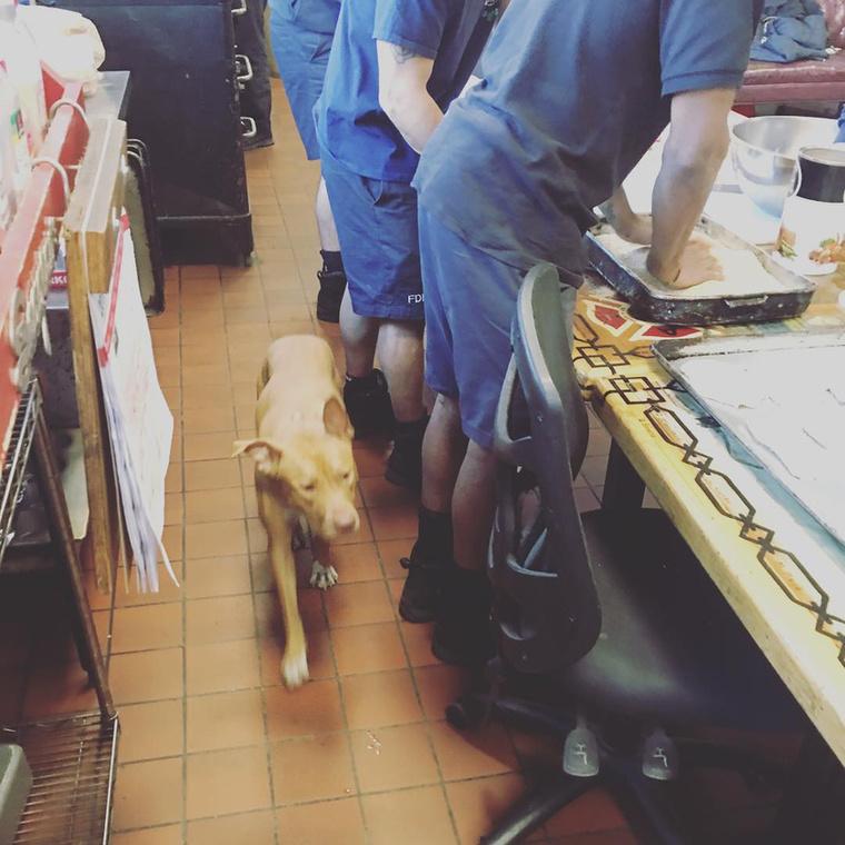 Ashley főleg az étkezéshez kapcsolódó műveleket felügyeli a tűzoltóságon.