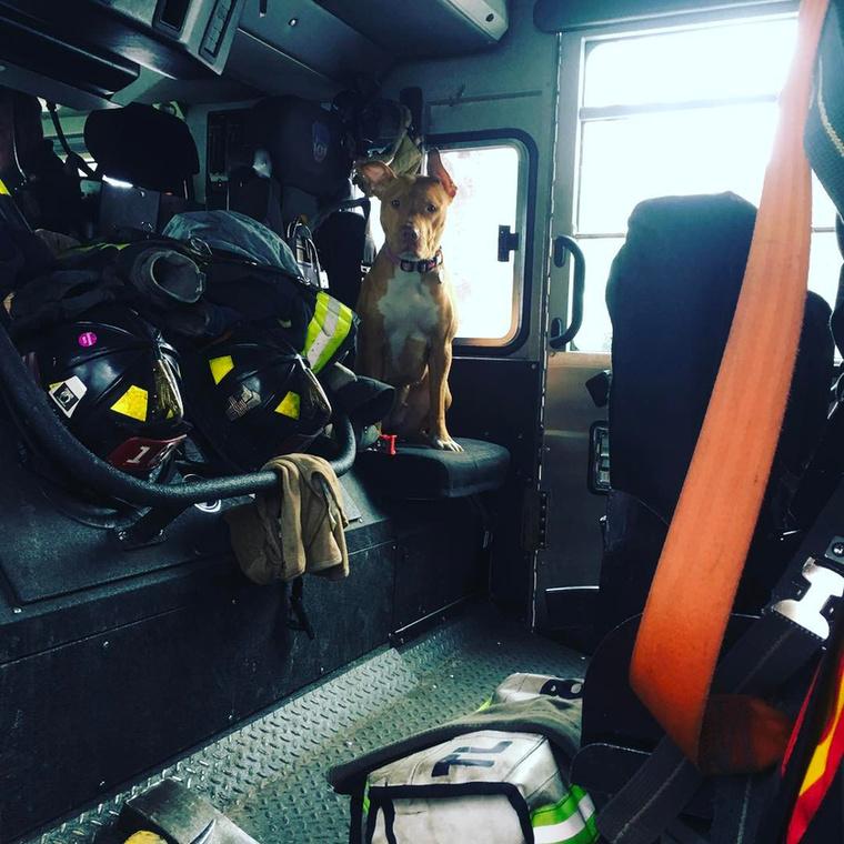 Érdeklődési körének másik legfontosabb pillérét a tűzoltóautók jelentik.