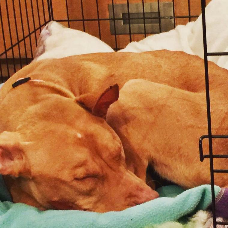 A közel egyéves kutyára borzasztó állapotban bukkantak rá egy elhagyatott drogtanyán, ahonnan egy állatvédő pár, Erica Mahnken és Michael Favor mentette ki őt.