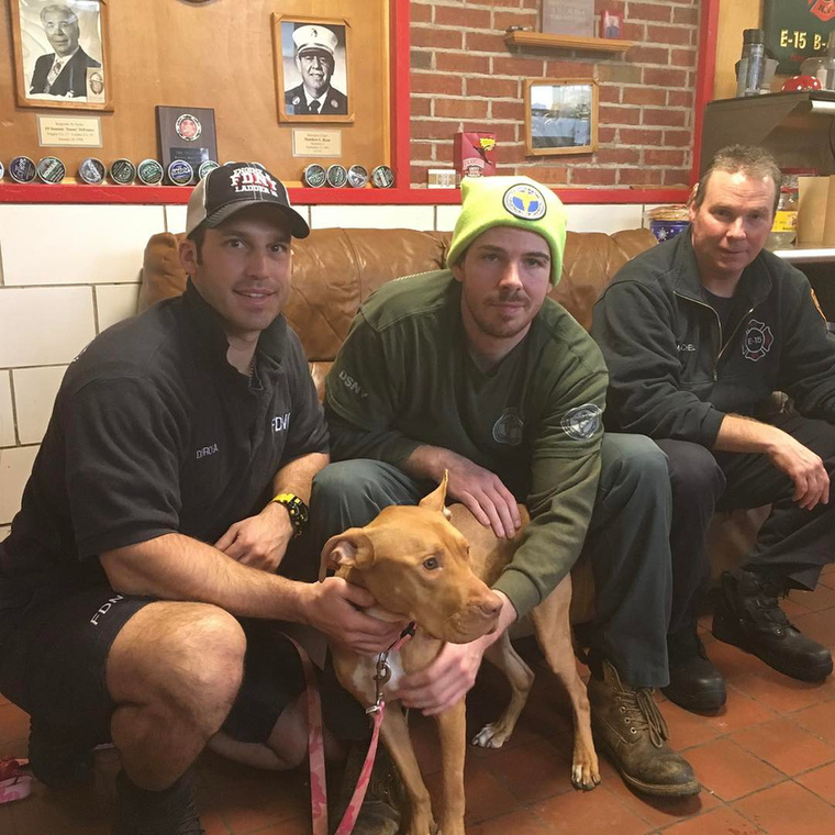 Bár a tűzoltók nem sokkal előtte vettek magukhoz egy rottweilert, a pitbullra sem tudtak nemet mondani