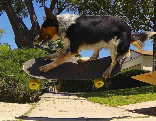 Jumpthedog1