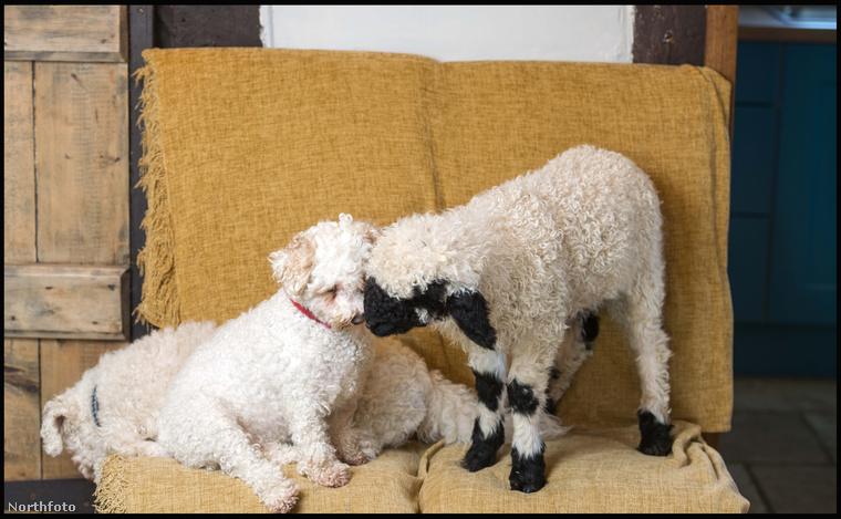 kutya egy barátokkal.