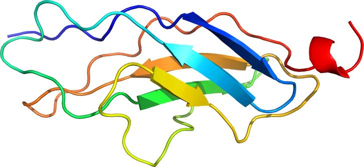 A titin I. típusú moduljának szerkezetét szemléltető rajz. A teljes fehérje szuperszerkezetét (azaz a teljes molekulastruktúrát) a különböző modulok/domainek alkotják.