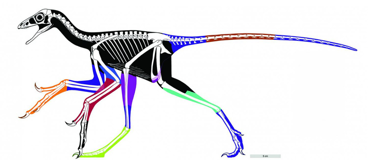 Anchiornis01