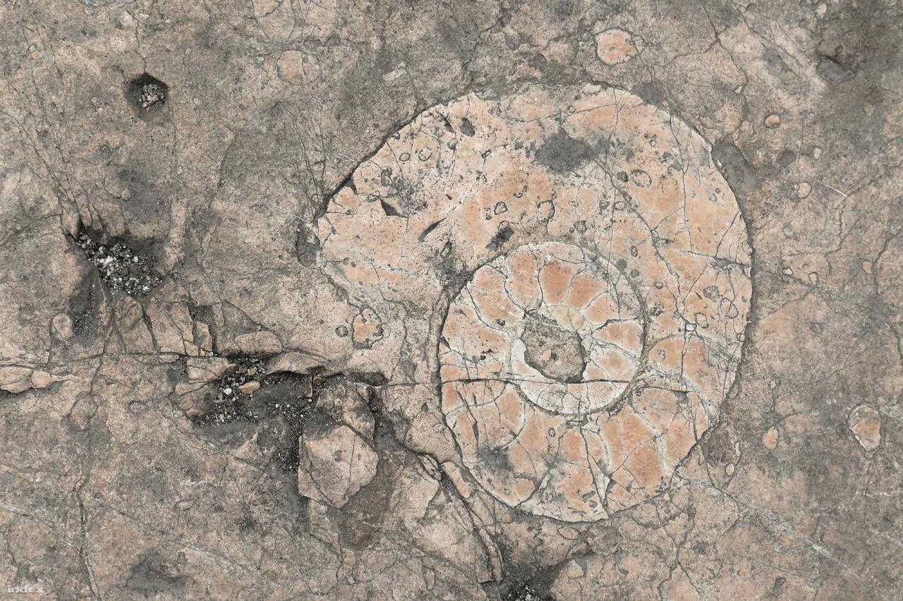 Több helyen is tenyérnyi ammonitesz fosszíliák mutatják a mészkő korát.