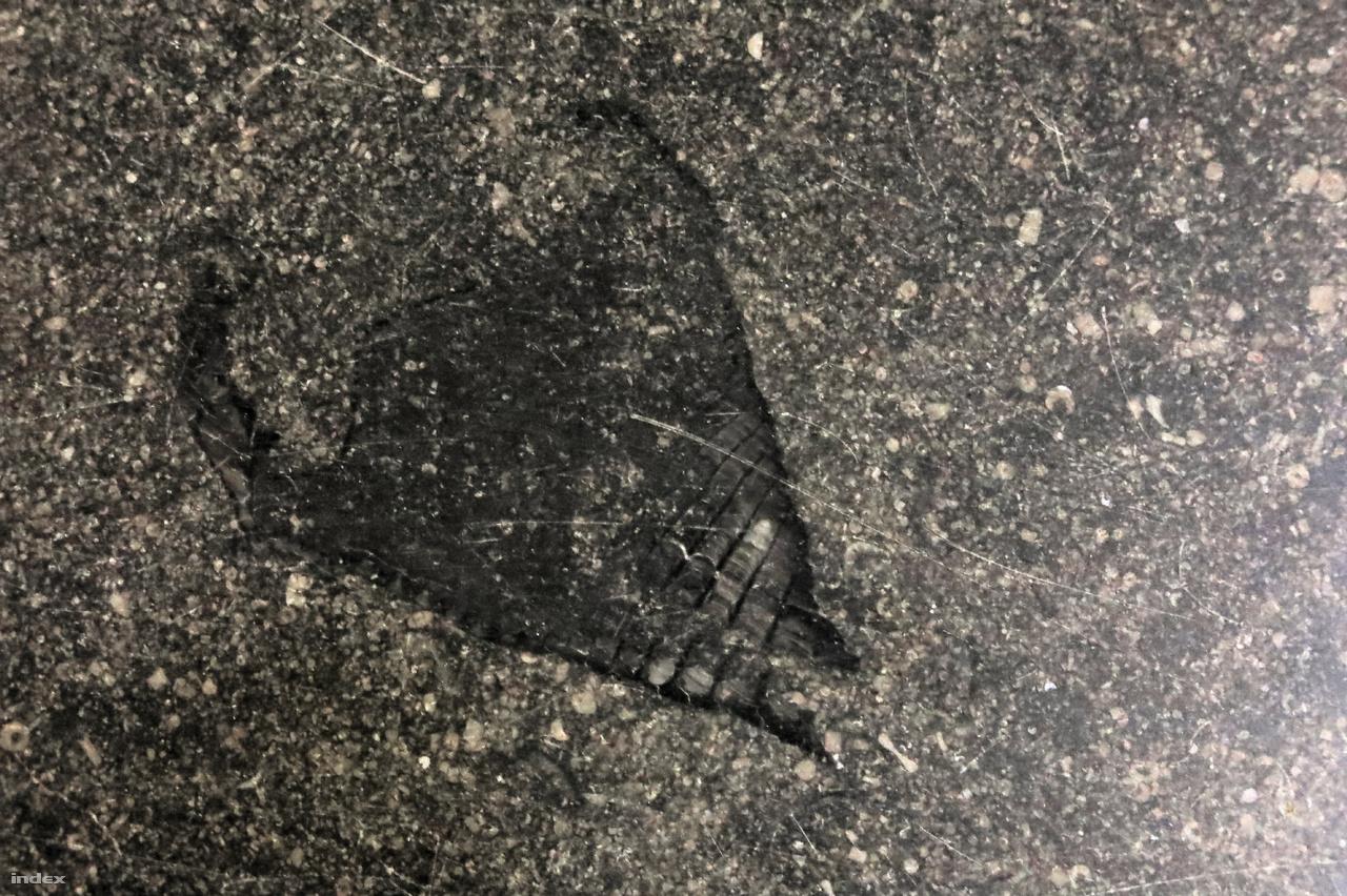 Több millió éves fosszíliák társaságában zajlanak a misék.