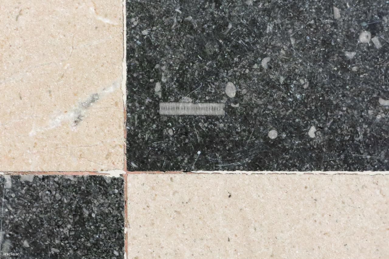 A padló sötétszürke, fekete táblái számtalan fehér korall-, krinoidea-, kagylótöredéket tartalmaznak.