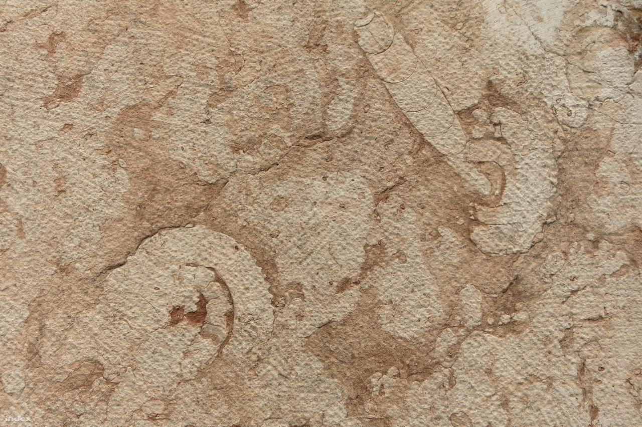 Változatos vázak fedezhetők fel a Szent István bazilika falát szemmagasságban borító jura korú vörös mészkőben.