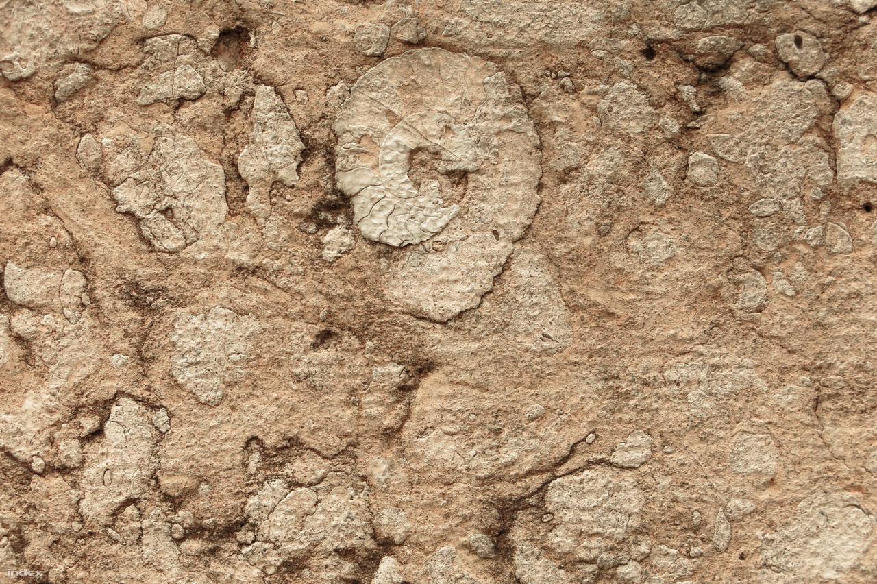 Egy szép állapotban megmaradt ammoniteszváz a zsinagóga lábazatában.