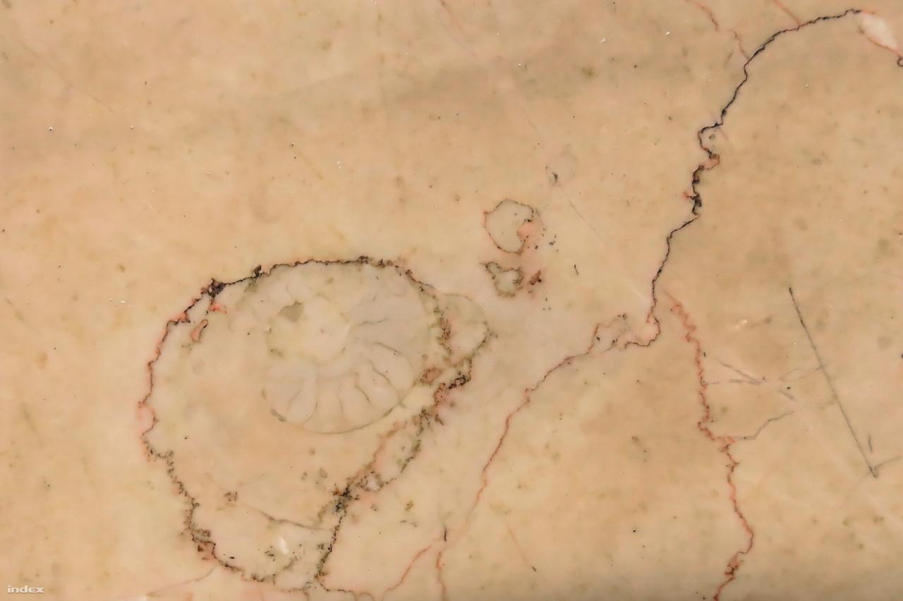 Miocén kori ammonitesz-maradvány a kettes metró szintjének kubai mészkőből rakott falában. Ez az élőlénycsoport ugyanúgy a kréta végi kihalásnak esett áldozatul, akár a dinoszauruszok.