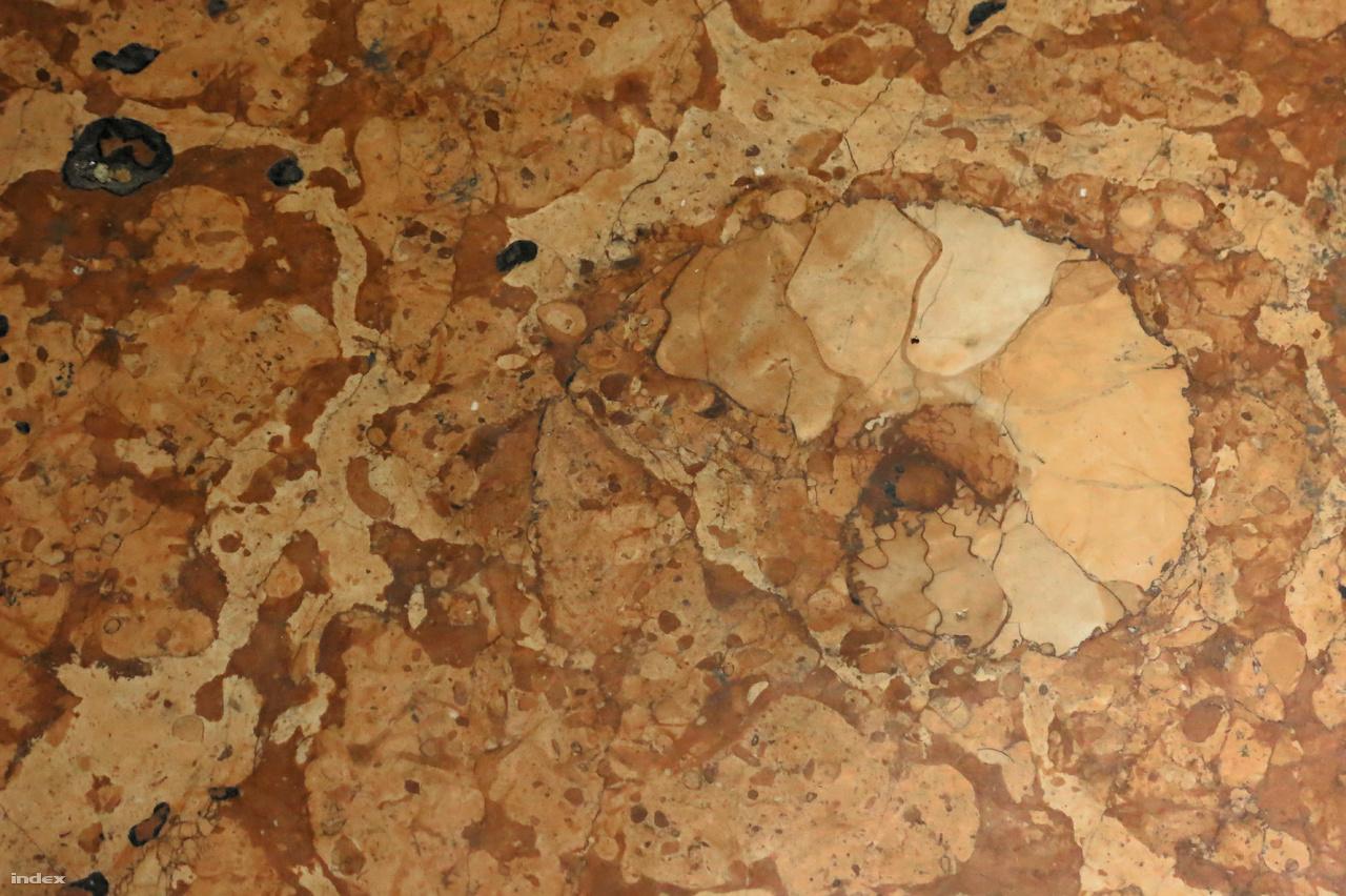 Ammonitesz háza a jura korból származó tardosi mészkőben. Ezek a puhatestűek közé tartozó lábasfejűek kamrákkal tagolt házukban éltek, amelyben a levegő-víz arányát változtatva süllyedtek-emelkedtek az óceánokban, akárcsak ma élő rokonaik, a csigáspolipok.