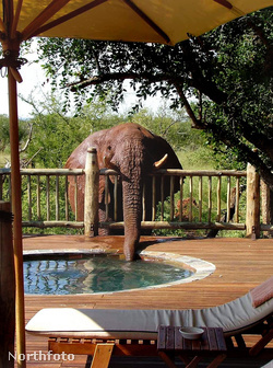caters elephant jacuzzi 01