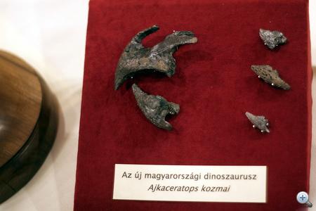 A lelet tudományos feldolgozása nemzetközileg is jelentős eredményekre vezetett. A magyar felfedezést a Nature, a legrangosabb természettudományos szaklap május végén megjelenő száma közli. A folyóirat hasábjain utoljára 35 éve, 1975-ben jelent meg cikk magyar őslénykutató tollából.