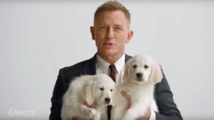 Daniel Craig + labrador kölykök + Aston Martin = minden, ami önnek kellhet, és öné lehet!