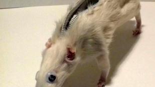Napi bizarr - egy brit srác állatok teteméből készít tárgyakat