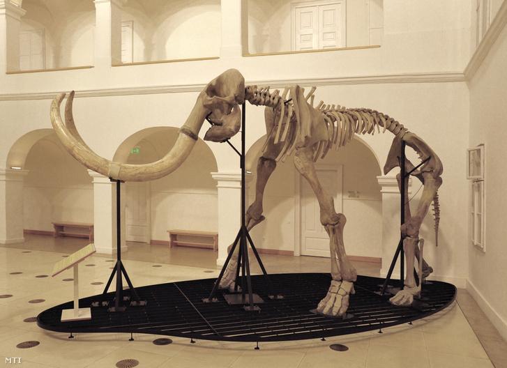 Számos problémával küzdöttek a mamutok