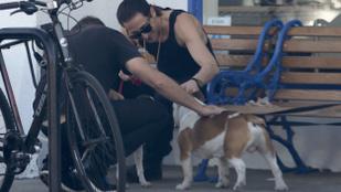 A kutyasétáltató Adrien Brody látványán nehéz túltenni magunkat