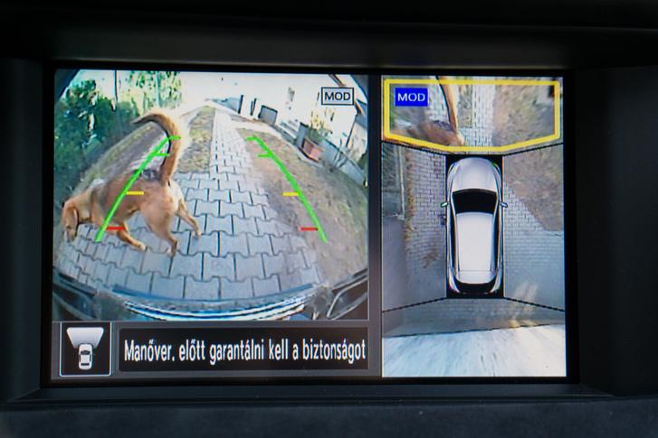 A skorpiószerű lény egy kutya, a négy nagylátószögű kamera képéből jól felmérhetők az akadályok az autó körül