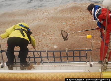 Szemétmintát halásznak a kutatók