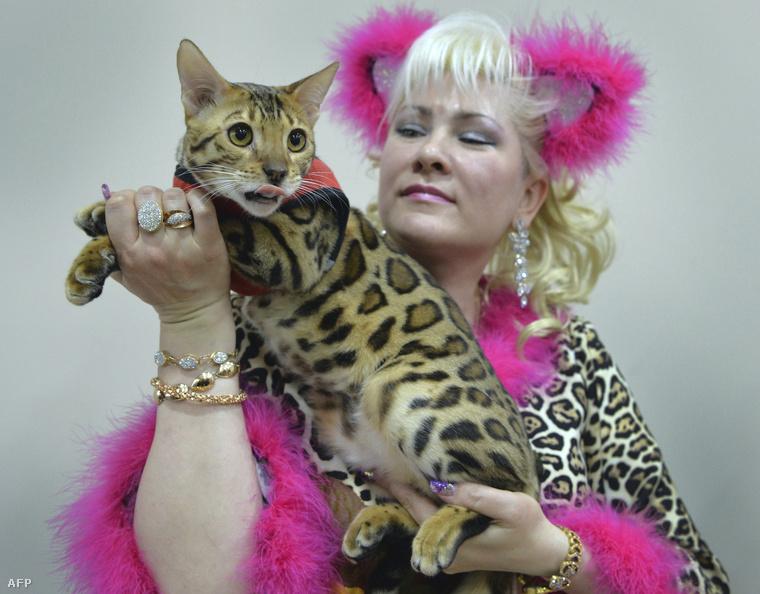 Ugyanis március 19-én rendezték Bishkekben a Kirgiz fővárosban a nemzetközi macskakiállítást