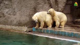 Nem kell hozzá az Északi-sark hogy Belij és Szerij otthon érezzék magukat