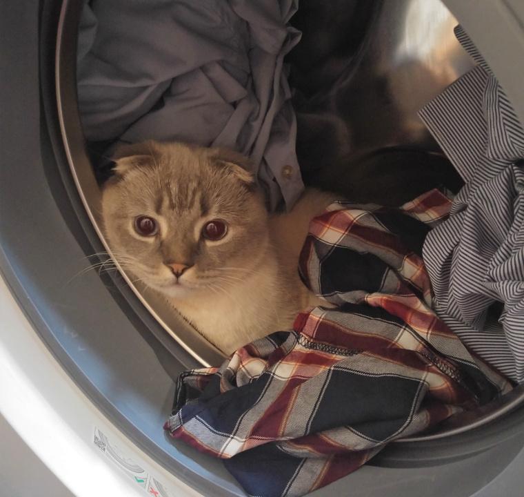 Ő itt az én macskám, Fahéj, és csak véletlenül került bele a cikkbe.