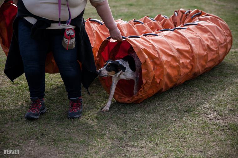 Ők nem a menhelyekben, hanem az állatvédelmi központok létrehozásában látják a jövőt, melyhez az angol Dogs Trust szolgál például.