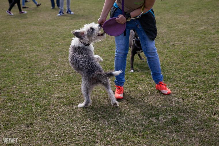 Az emberek sok esetben fajtatiszta állatot választanak és nem számolnak azzal a veszéllyel, hogy a tenyésztők is működhetnek illegáslisan,  szaporító telephelyekként.