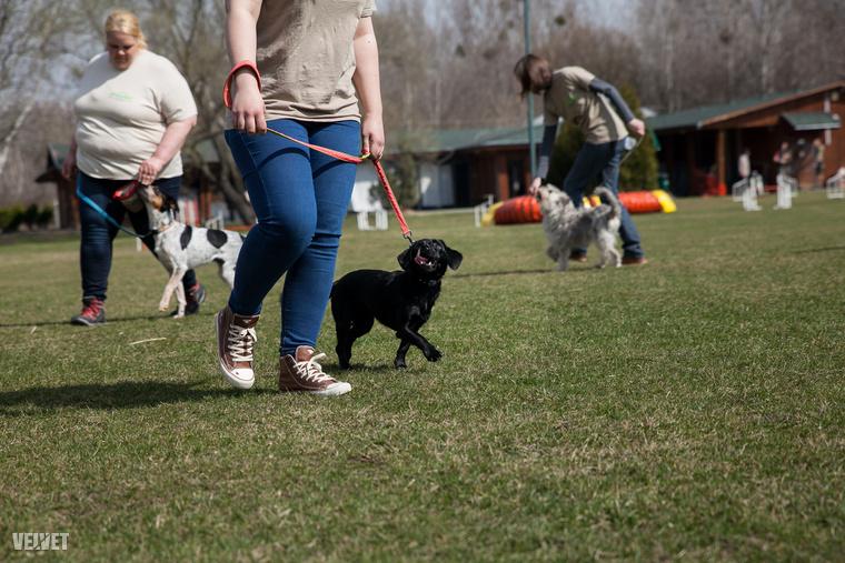 Az Alapítvány ugyanis elhivatottan áll ki a felelős hazai állattartásért, emiatt úgy döntöttek, 2017