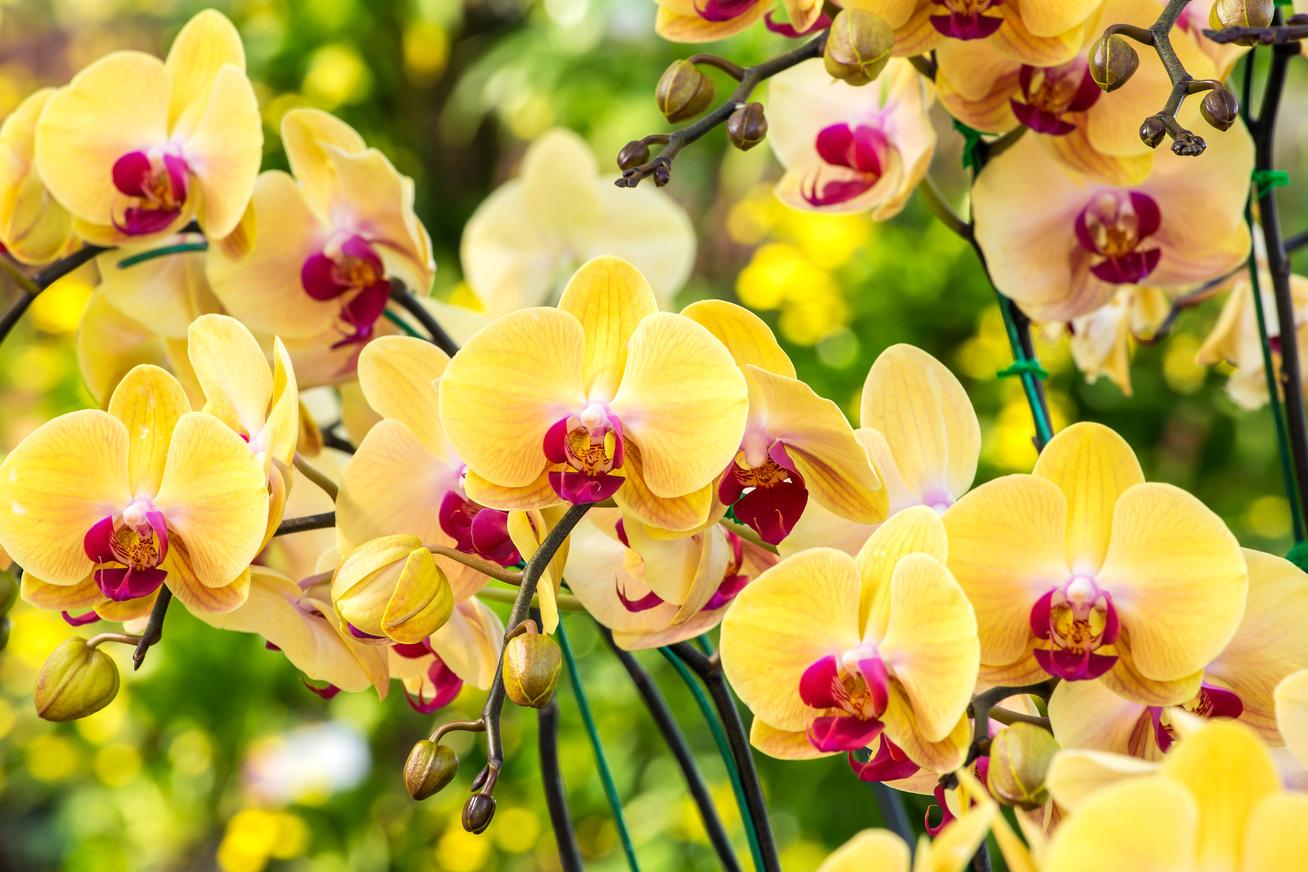 nagykep?cikkid=162381&kep=orchidea2-lead