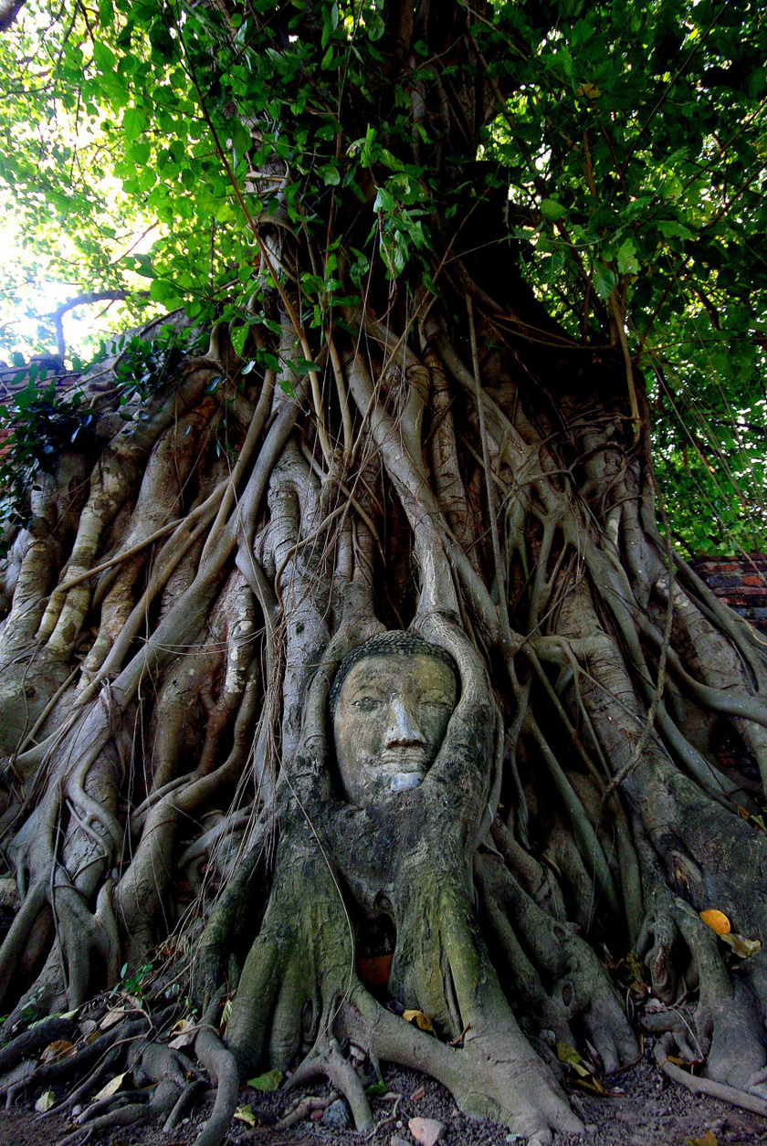 thaifold-buddha