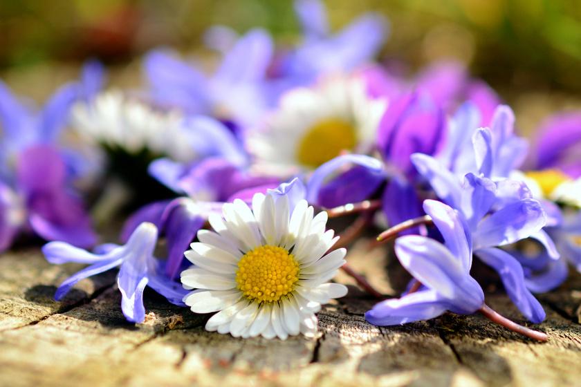 tavaszi-viragok