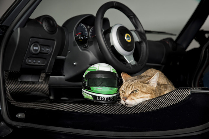 lotus-helmets-cats