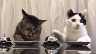 Minket megbűvölt ez a két, ételért csengető cica