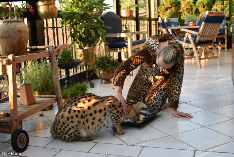 """Ivana gyakorlatilag az egész életét a cicáknak szentelte, és még a 4000 négyzetméteres farmját is átalakította a """"macskák mennyországává"""".Sőt, még a prágai állatkertnek is besegített, ésbefogadott egy oroszlánkölyköt"""