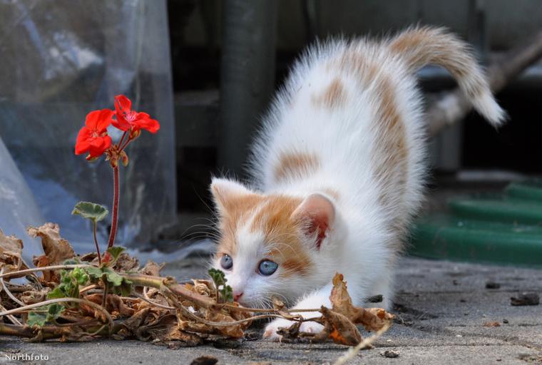 A cicák teljes összkomfortban és luxus környezetben élik hétköznapjaikat