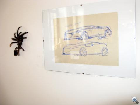 Winkler madárpókjának páncélja mellett a falon...
