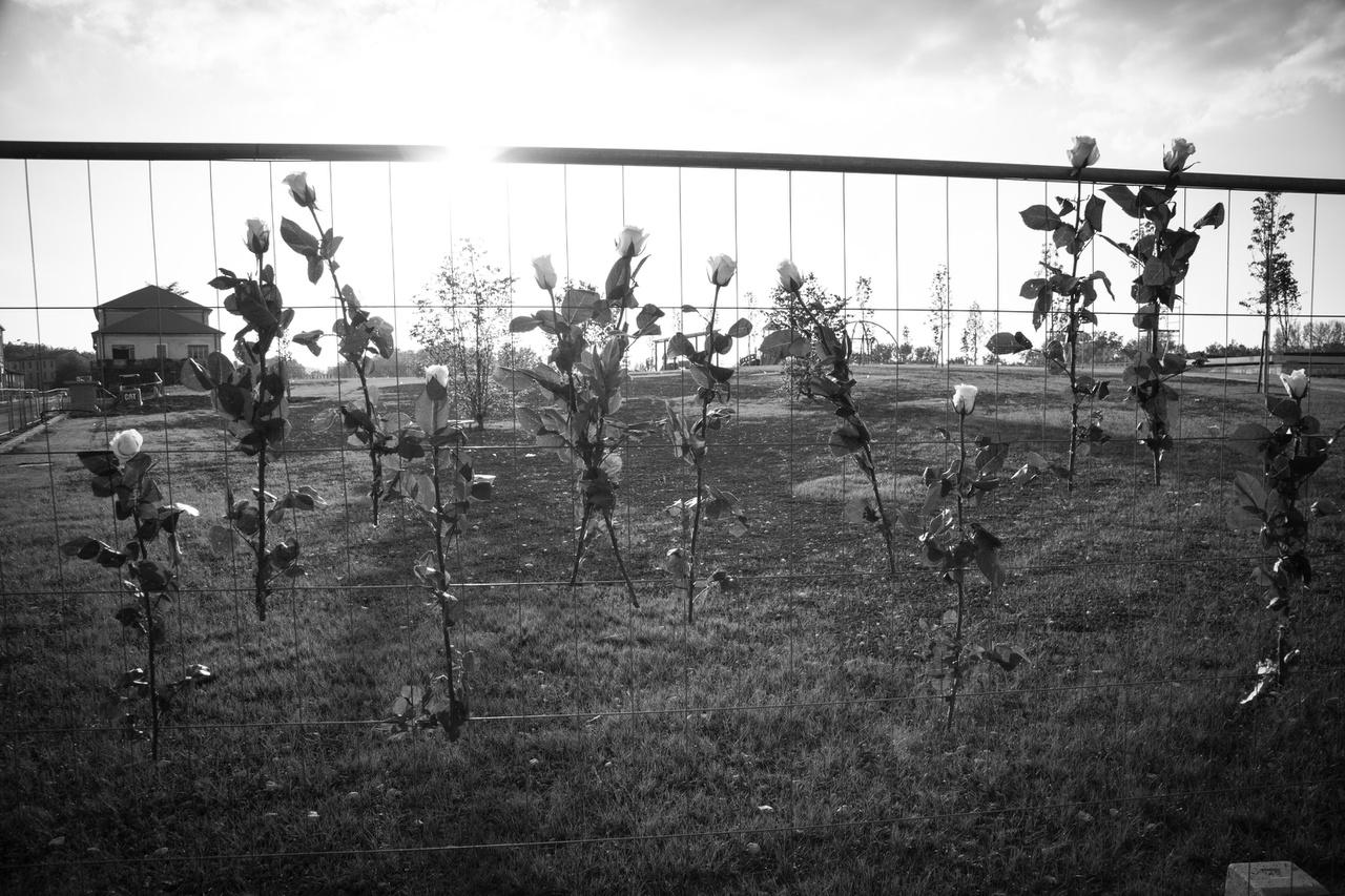 Casale Monferrato: az azbesztózis áldozataira emlékeztetnek az egykori eternitgyár kerítésére tűzött fehér rózsák április 28-án, a munkahelyi egészség és biztonság világnapján. A lebontott gyárépületek helyén most játszótér van.