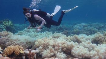 Öt halálközeli élménye is volt a Nagy-korallzátonynak