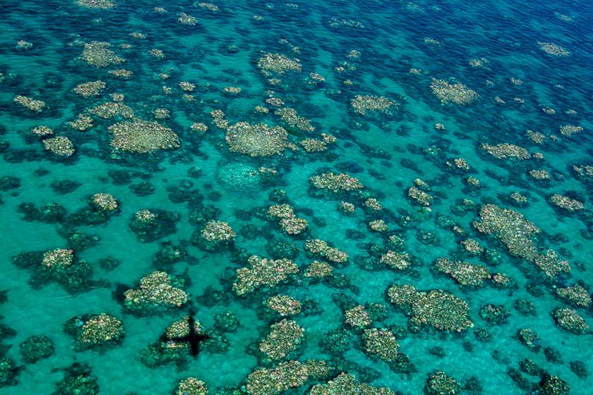 Az ausztráliai Nagy Korallzátony sérült koralljai