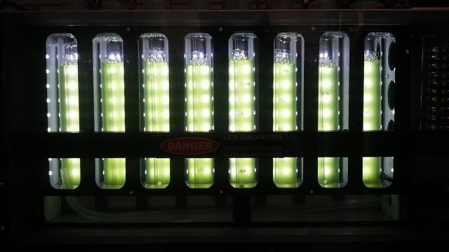 Chlamydomonas zöldalgák fotobioreaktorban