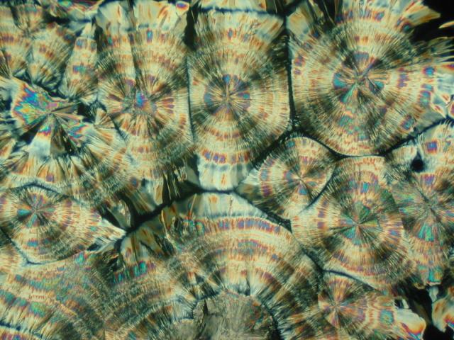 Aszkorbinsav-kristályok mikroszkópos képe