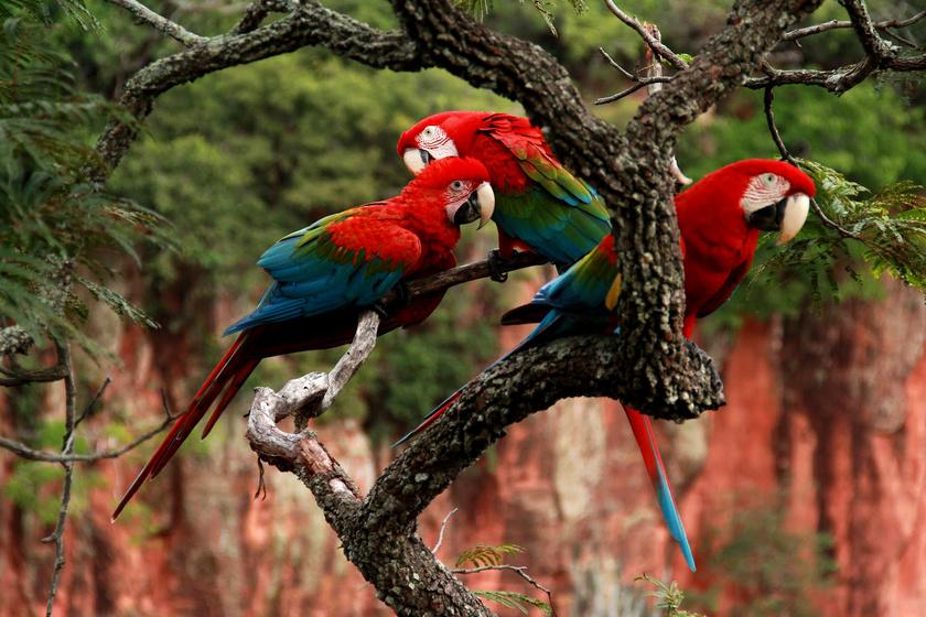 A papagájok szeretik a társaságot, így nem ritka, hogy a turistákat színes rajok lepik meg.