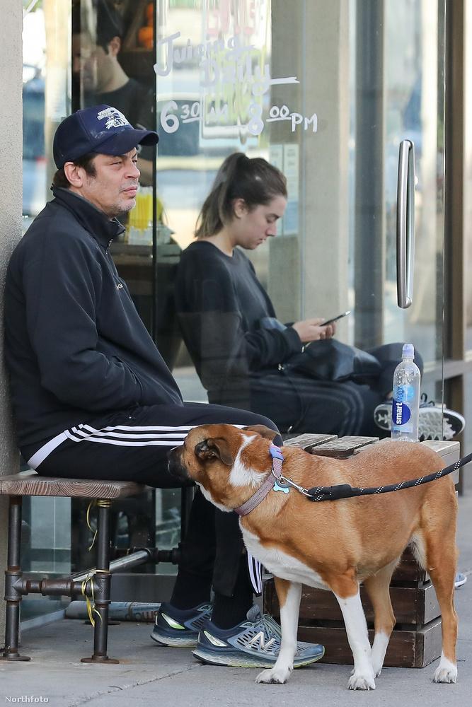 Fásultságából még az sem tudta kimozdítani, hogy egy arra tévedő kutya fokozott érdeklődést mutatott iránta.