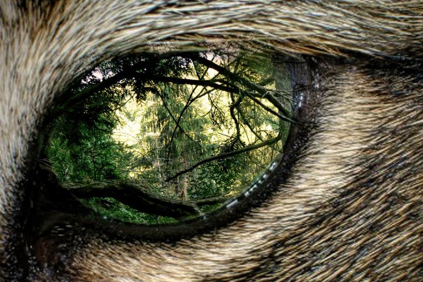 Az erdő szeme