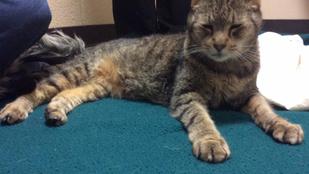 2 és fél év után, a Facebookon botlott bele eltűnt macskájába