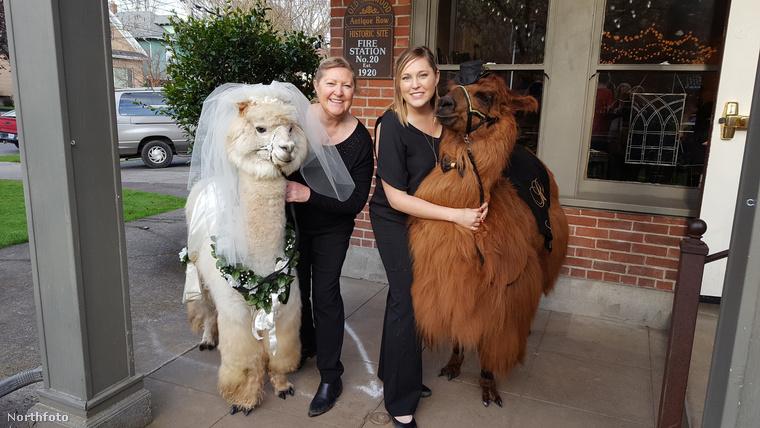 Van, akinek véletlenül jönnek össze a gyönyörű, állatos esküvői fotók, de aki nem szeretné a sorsa bízni, az tehát béreljen idomított lámát! Köszönjük szépen és nagyon örülünk, hogy ezt megoszthattuk önnel.