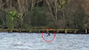 Aggódik a Loch Ness-i szörnyért? Ne tegye, mert épségben került elő!