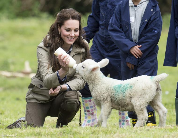 A hercegné teljesen otthonosan érezte magát a farmon